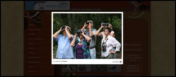 Gallery image view, Western Cape Birding